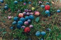 Wolfgang Tillmans, Windfall, 2002. Deutsche Bank Collection. © Wolfgang Tillmans