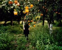 Anni Lepp�l�, Orange Tree, from the series 'Possibility of Constancy'. 2008. Deutsche Bank Collection. � Anni Lepp�l�. Courtesy Gallery TaiK